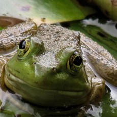 Things to do in Worcester, MA: FrogWatch USA Training
