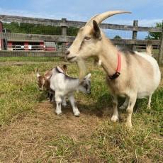 Laurel-Columbia, MD Events: Fun at Clark's Elioak Farm