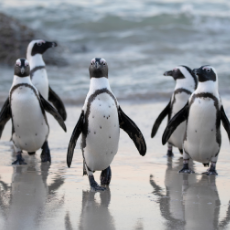 Chat with a World-Renowned Penguin Scientist