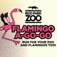 Flamingo-A-Go-Go: Run for Your Zoo and Flamingos Too!