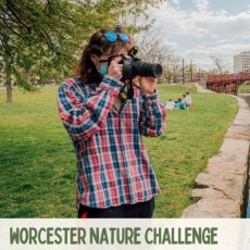 Things to do in Worcester, MA for Kids: Worcester Nature Challenge 2021, Wild Worcester