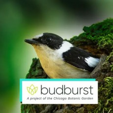 Towson, MD Events for Kids: [National] Help Scientists Solve a Bird Mystery