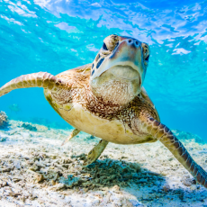 Spend Earth Day with Sea Turtles