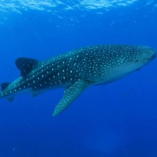 Warwick, RI Events: Explore the Sharks of the Galapagos Islands