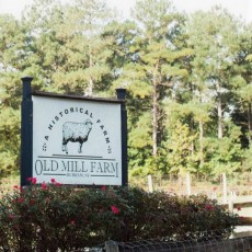 Durham-Chapel Hill, NC Events for Kids: Afternoons at Old Mill Farm