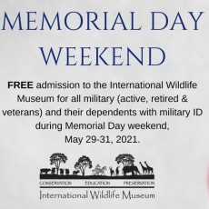 Things to do in Casa Adobes-Oro Valley, AZ for Kids: Memorial Day Weekend at IWM, International Wildlife Museum