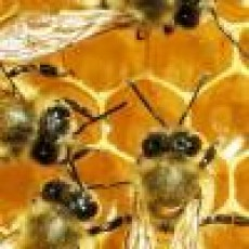 Things to do in Warwick, RI for Kids: Tales from the Hive with Local Beekeepers, Warwick Public Library - Sandy Lane