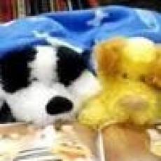 Things to do in Warwick, RI: Stuffed Animal Sleepover