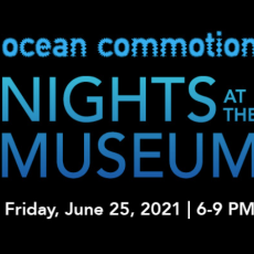 Things to do in Palm Beach Gardens, FL for Kids: Nights at the Museum - Ocean Commotion!, South Florida Science Center and Aquarium