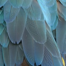 Things to do in Worcester, MA: Art, Nature, and Play Series: Feather Fest