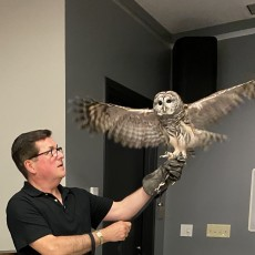 Things to do in Wellesley-Framingham, MA for Kids: WINGMASTERS: Birds of Prey, Dover Town Library