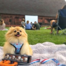 Things to do in Madison, WI: Movie in the Park
