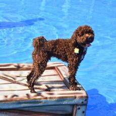 Doggie Dash & Splash