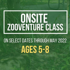 Things to do in Altamonte-Winter Park, FL for Kids: ZOOventure Class for ages 5-8, Central Florida Zoo & Botanical Gardens