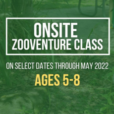 ZOOventure Class For ages 5-8