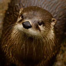 Things to do in Hulafrog at Home: Go on a River Otter Adventure