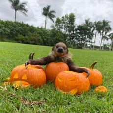 Walkthrough Spooky Safari Tour & Covid Safe Personal Pumpkin Patches
