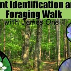 Plant & Mushroom Foraging-Identification Walk