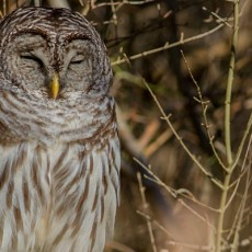 Cape May County, NJ Events: Nighttime at the Nature Center