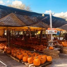 Pumpkin Towne is OPEN!