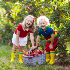 Apple Picking? Grab these Gadgets