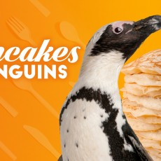 Things to do in Myrtle Beach, SC for Kids: PANCAKES & PENGUINS, Ripley's Aquarium of Myrtle Beach