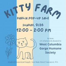 Kitty Farm Dahlia Pop-Up