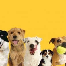 Dog Walk & Adoption Event