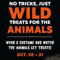 Things to do in Palm Beach Gardens, FL for Kids: Palm Beach Zoo's Pumpkinpalooza, Palm Beach Zoo