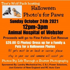 Halloween Photo's for Paws