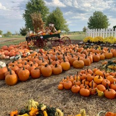 Things to do in Olathe, KS for Kids: Santa & Hayrides at the Patch, Alldredge Orchards