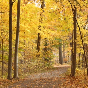 Things to do in Clarkston-Waterford Township, MI: Fall Foliage Hike