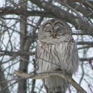 Worcester, MA Events for Kids: Owl Prowl for Families
