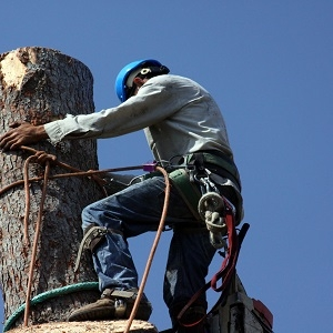 Midstate Tree Service of Harrisburg