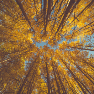 Fort Collins, CO Events: Museum Takeover: Tremendous Trees