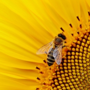 Fort Collins, CO Events: Little STEAMers: B is for Bees