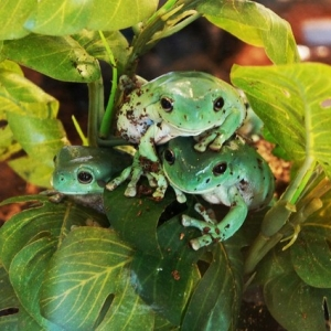 Fort Collins, CO Events: Little STEAMers: All About Amphibians