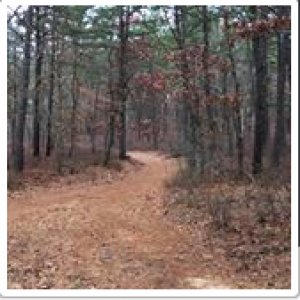 Mountain Bike Trails At Allaire State Park