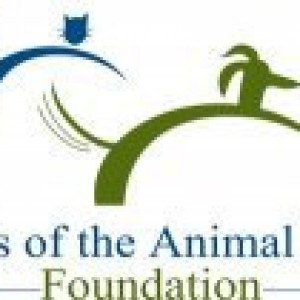 Provide a Loving Home for Companion Animals