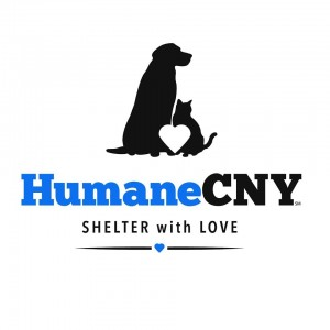 Providing Loving Homes to Cats & Dogs