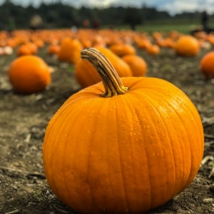 Lake Norman, NC Events: Dinner & a Movie - The Great Pumpkin