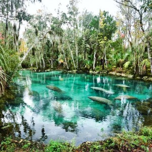 Three Sisters Springs: View the Manatees