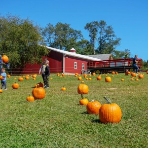 Allaire Community Farm: Spend the Day at the Farm