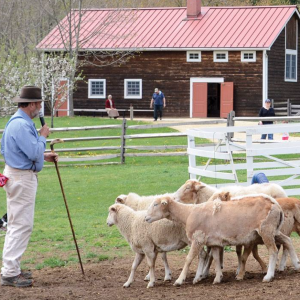 Historic Longstreet Farm: Visit the Farm Animals
