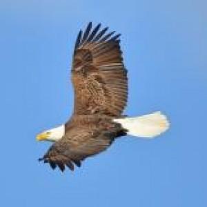 Eagle Bluffs Conservation Area: Birdwatching