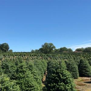 Henry's Christmas Tree Farm