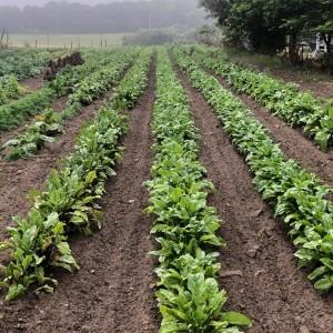 Healey Farm
