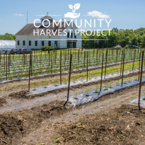 Volunteer Farming for Hunger Relief