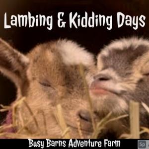 Madison, WI Events: Barnyard Adventures - Lambing & Kidding