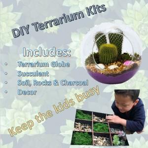 Hallene Farm: DIY Terrarium Kits